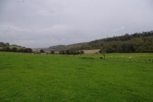 Farm Pasture - Small