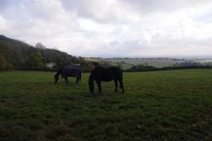 Horses-small